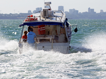 Darwin Harbour Seagrass Surveys
