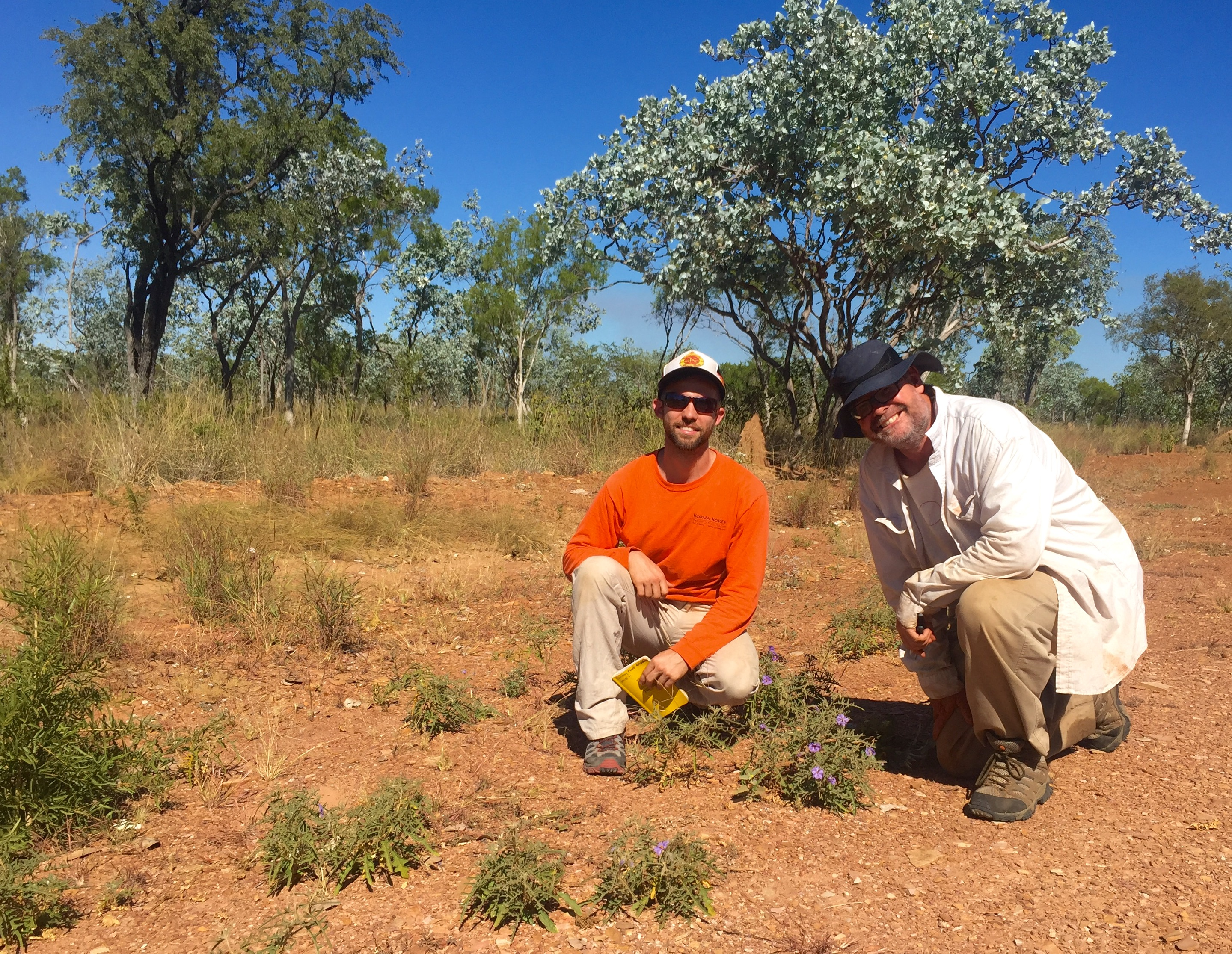 Bush Tomato Named After Alice Springs Botanist