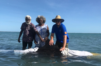 Sea Rangers and Traditional Owners rescue a stranded False Killer Whale at Groote Eylandt